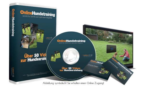 Online Hundetraining Welpenschule - Online Erziehung für Hunde